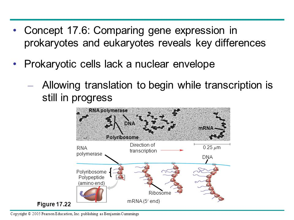 Prokaryotic cells lack a nuclear envelope