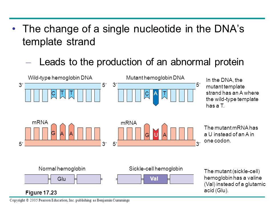 The change of a single nucleotide in the DNA's template strand