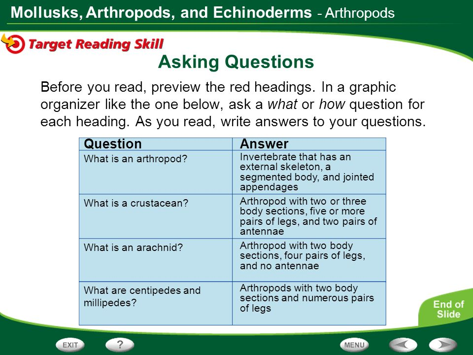 Asking Questions - Arthropods