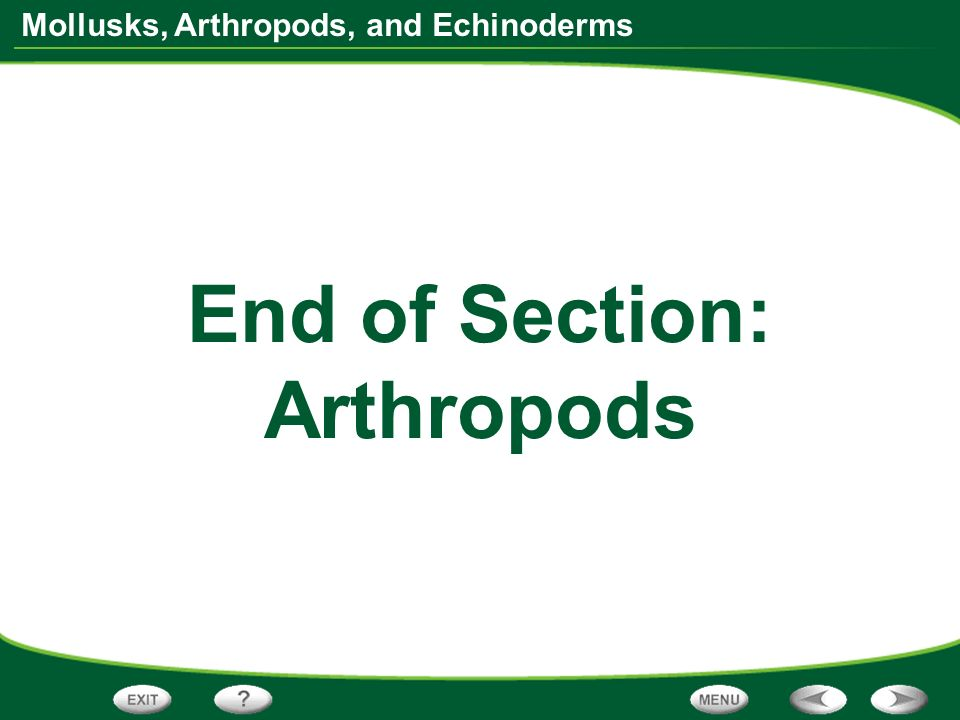 End of Section: Arthropods