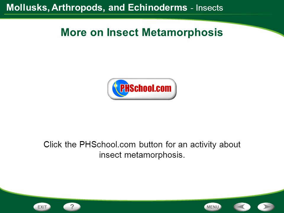 More on Insect Metamorphosis