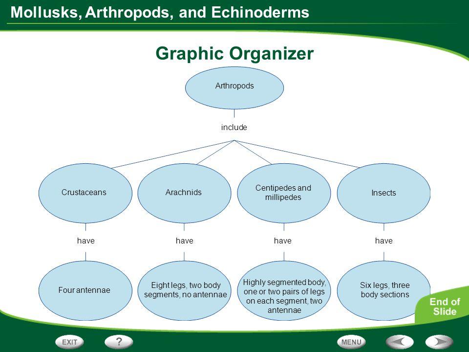 Graphic Organizer Arthropods include Centipedes and millipedes