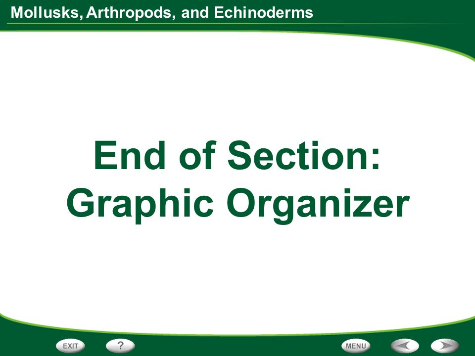 End of Section: Graphic Organizer