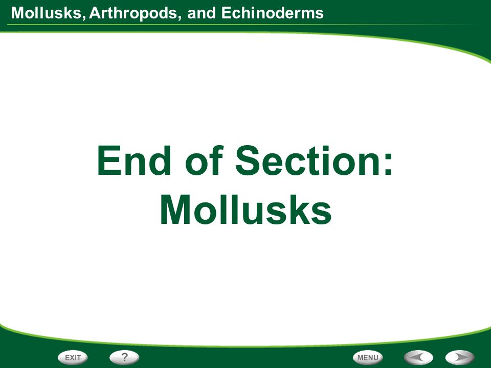End of Section: Mollusks