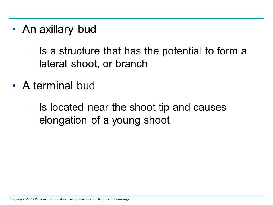 An axillary bud A terminal bud