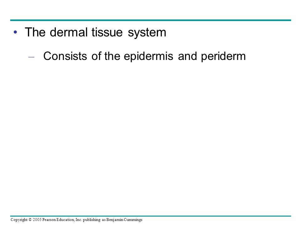 The dermal tissue system