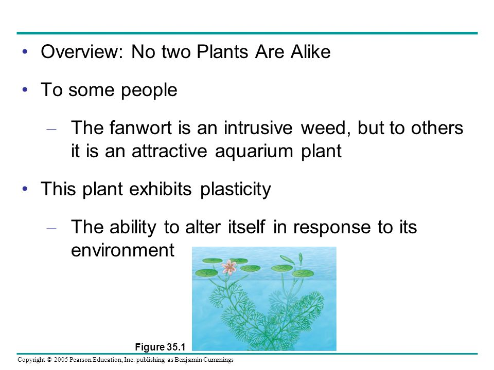 Overview: No two Plants Are Alike To some people