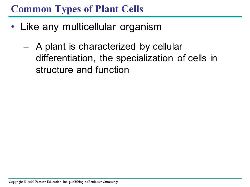 Common Types of Plant Cells