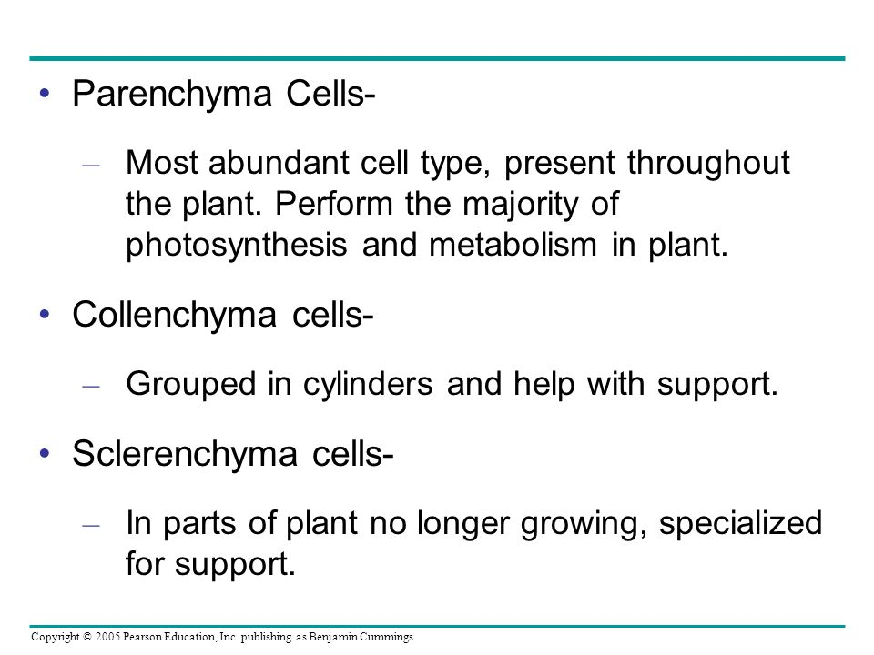 Parenchyma Cells- Collenchyma cells- Sclerenchyma cells-