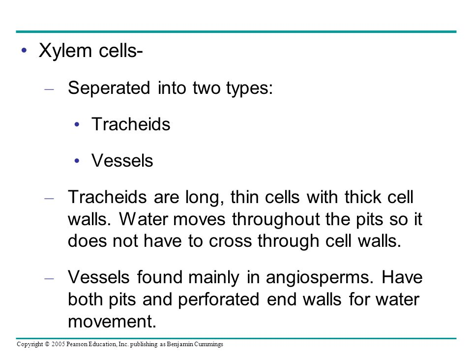 Xylem cells- Seperated into two types: Tracheids Vessels
