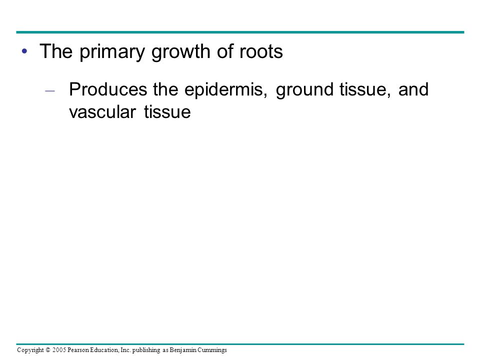 The primary growth of roots