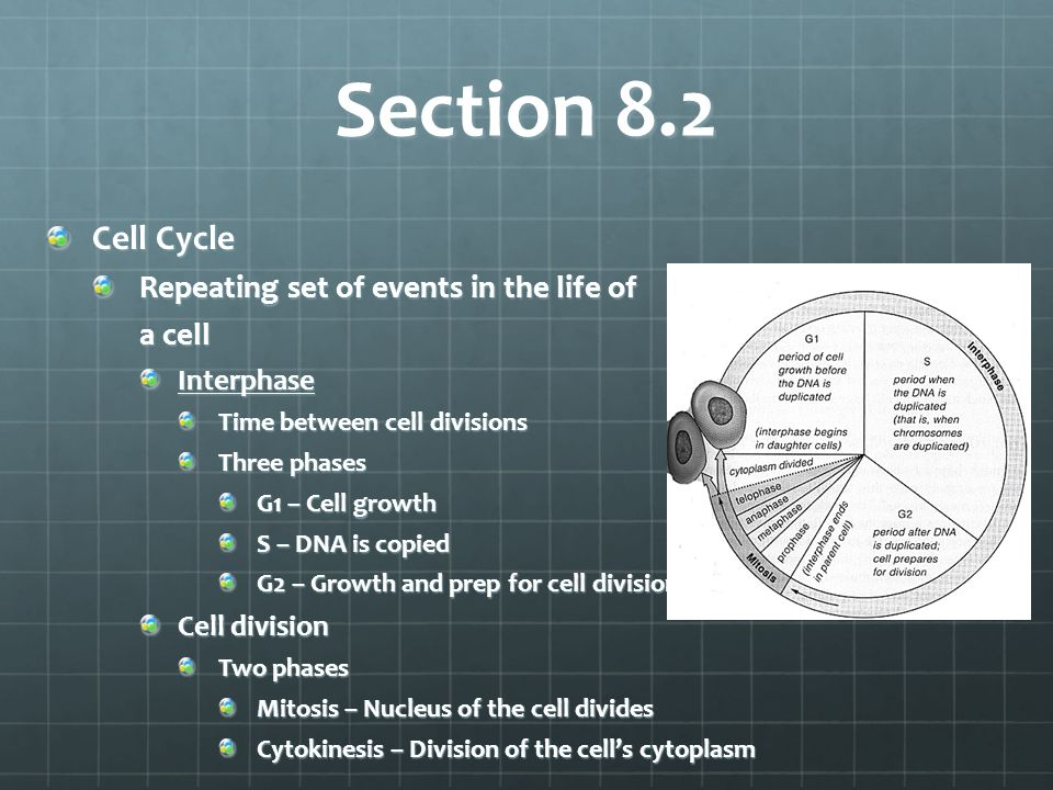 Section 8.2 Cell Cycle Repeating set of events in the life of a cell