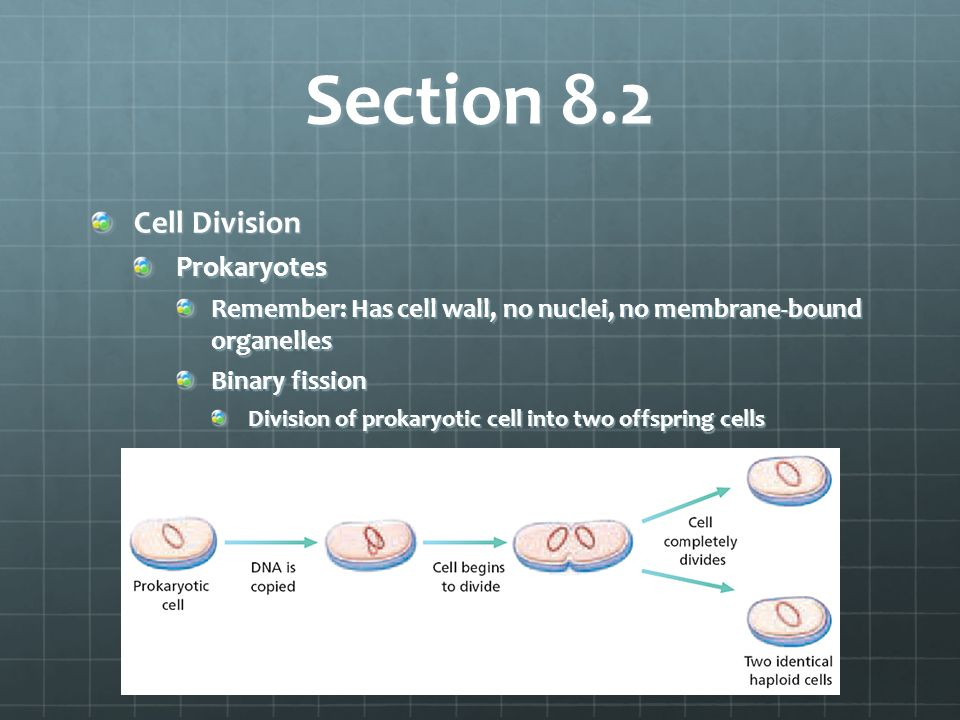 Section 8.2 Cell Division Prokaryotes