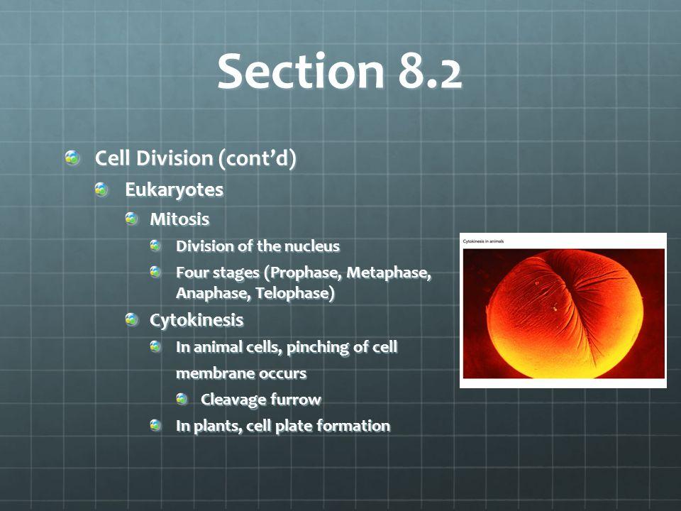 Section 8.2 Cell Division (cont'd) Eukaryotes Mitosis Cytokinesis