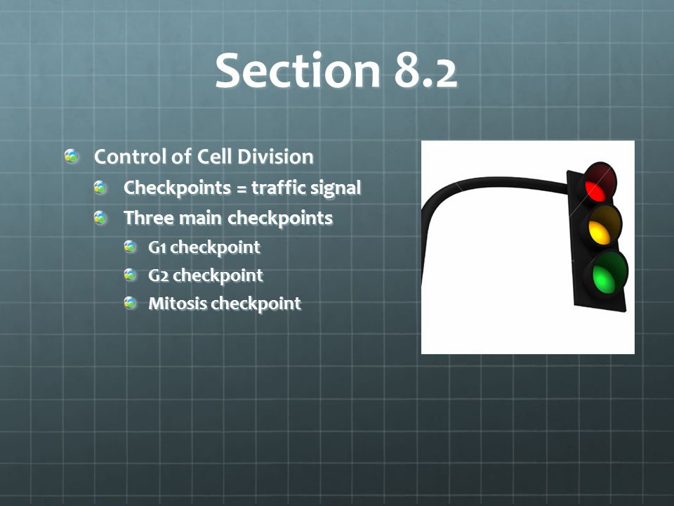 Section 8.2 Control of Cell Division Checkpoints = traffic signal