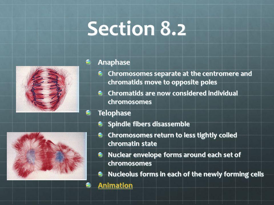 Section 8.2 Anaphase Telophase Animation