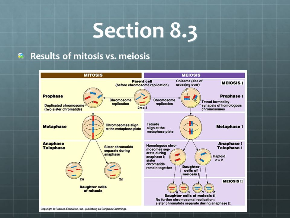 Section 8.3 Results of mitosis vs. meiosis