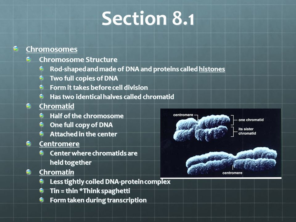 Section 8.1 Chromosomes Chromosome Structure Chromatid Centromere