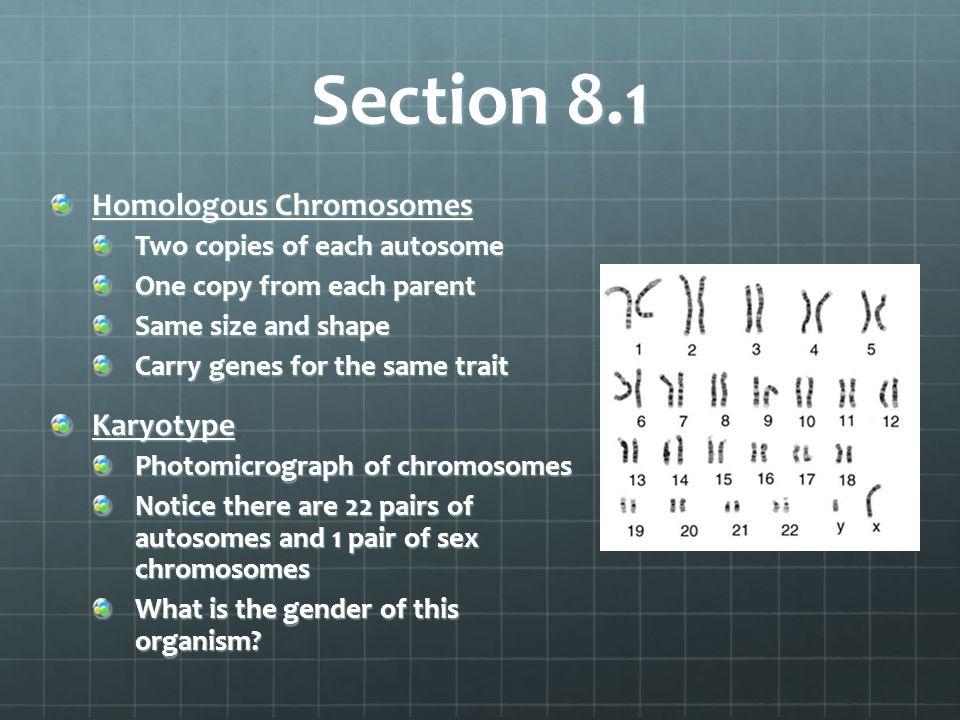 Section 8.1 Homologous Chromosomes Karyotype