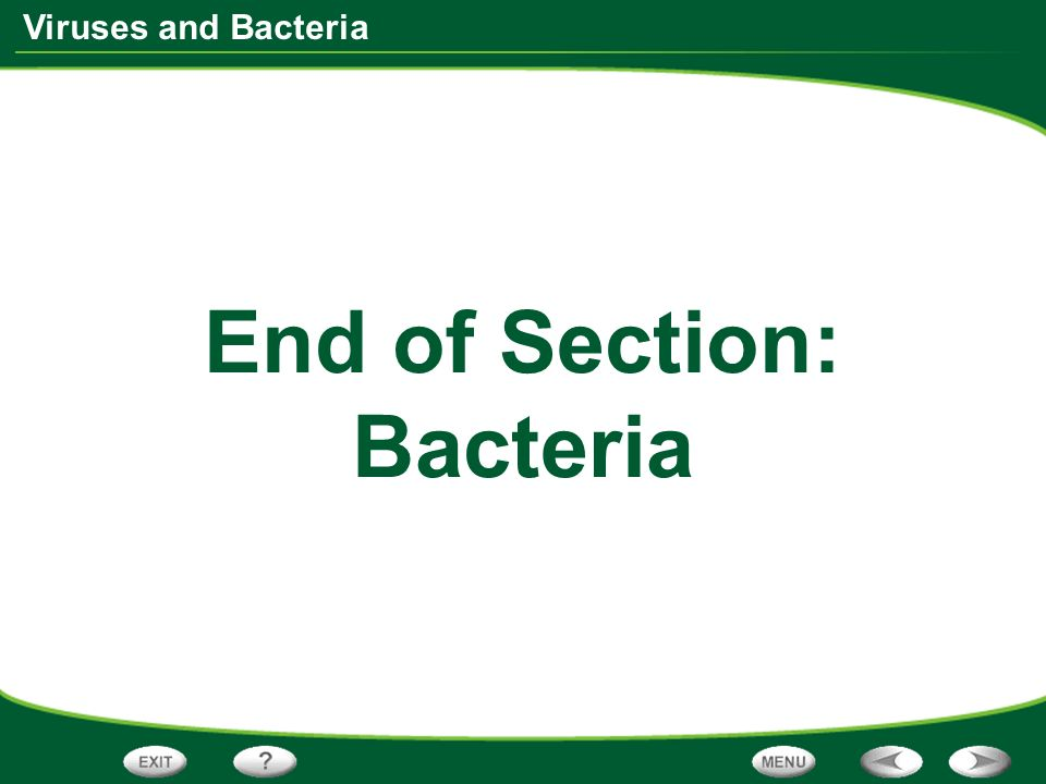 End of Section: Bacteria