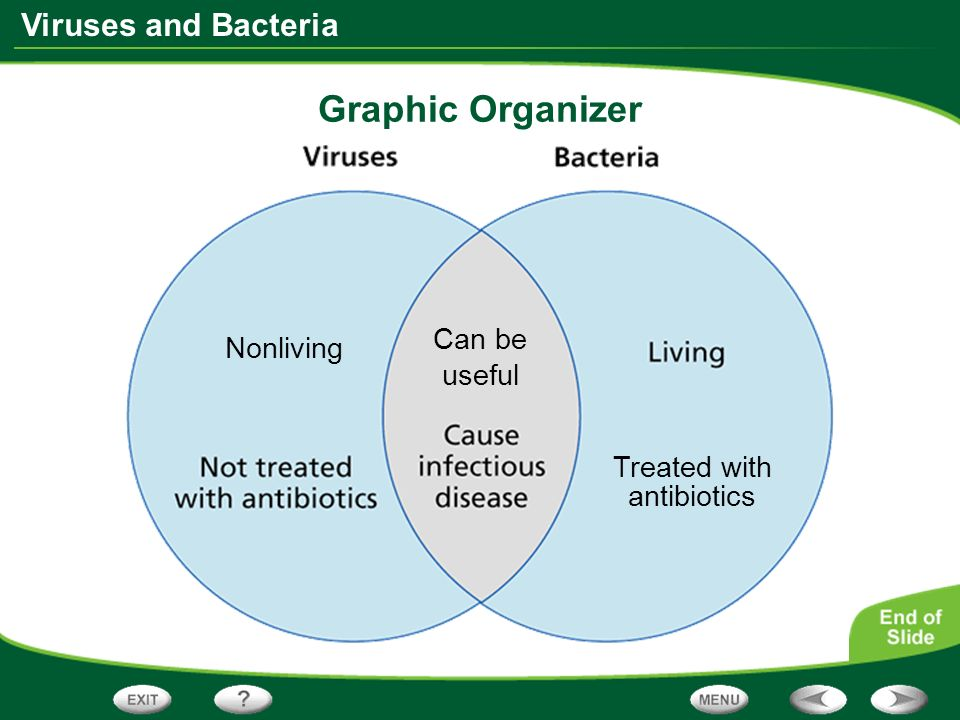 Graphic Organizer Nonliving Can be useful Treated with antibiotics