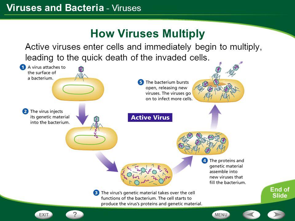How Viruses Multiply - Viruses