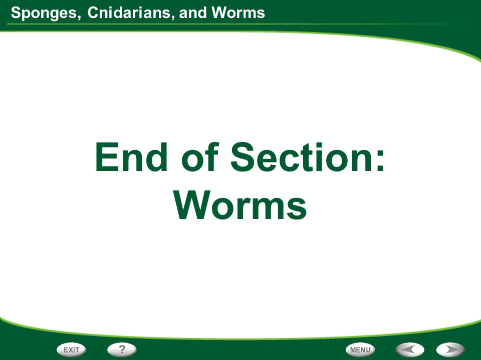 End of Section: Worms