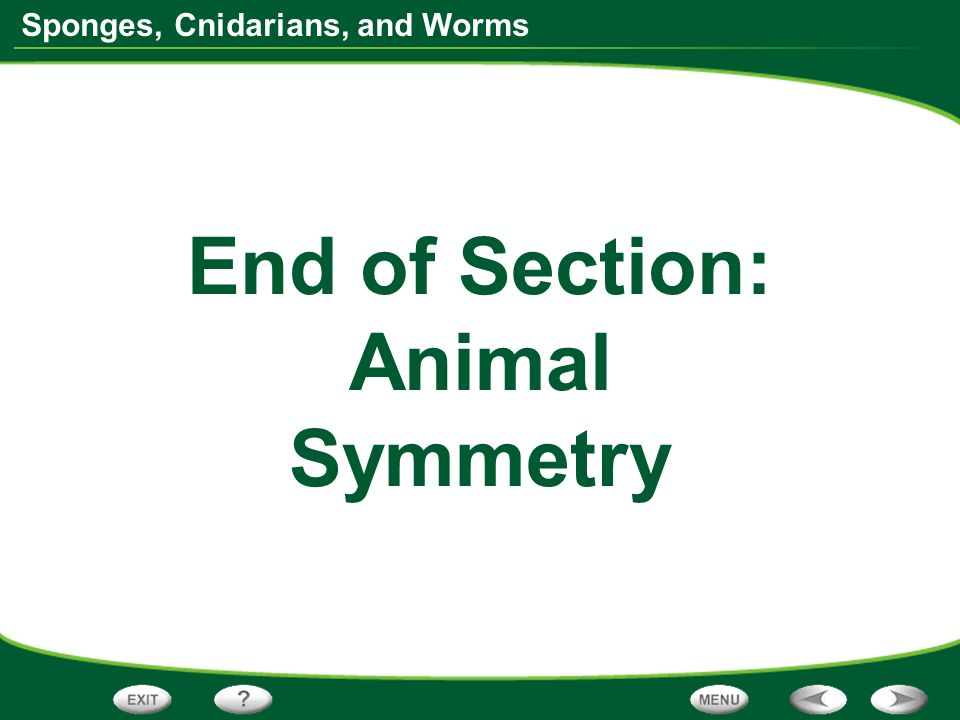 End of Section: Animal Symmetry
