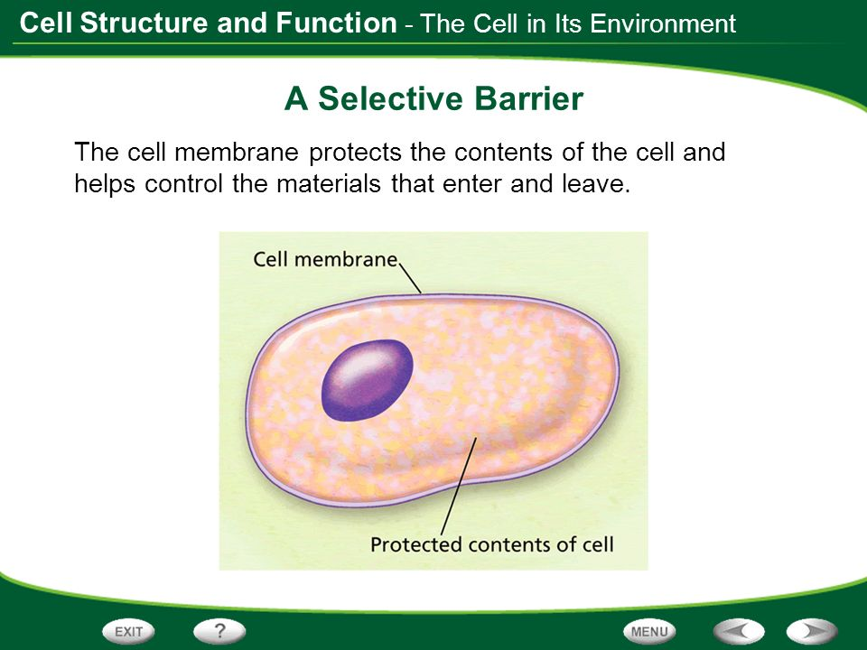 A Selective Barrier - The Cell in Its Environment