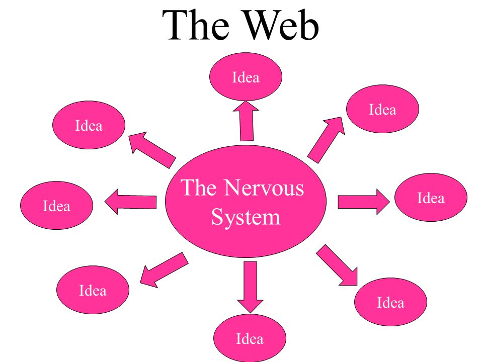 The Web Idea Idea Idea The Nervous System Idea Idea Idea Idea Idea
