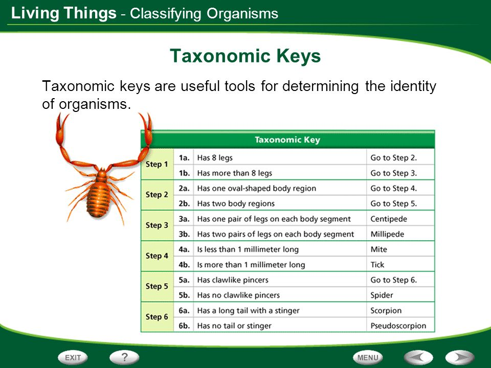 Taxonomic Keys - Classifying Organisms