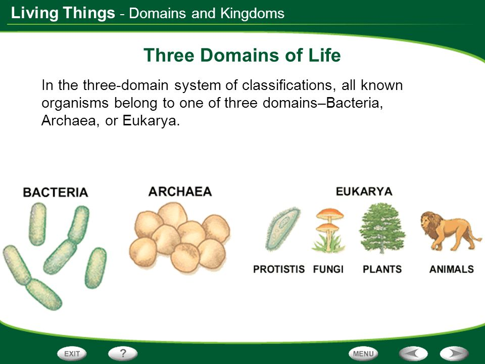 Three Domains of Life - Domains and Kingdoms