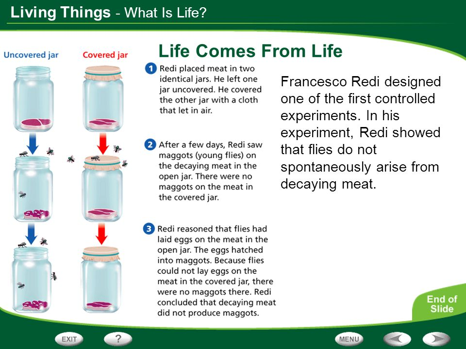 Life Comes From Life - What Is Life