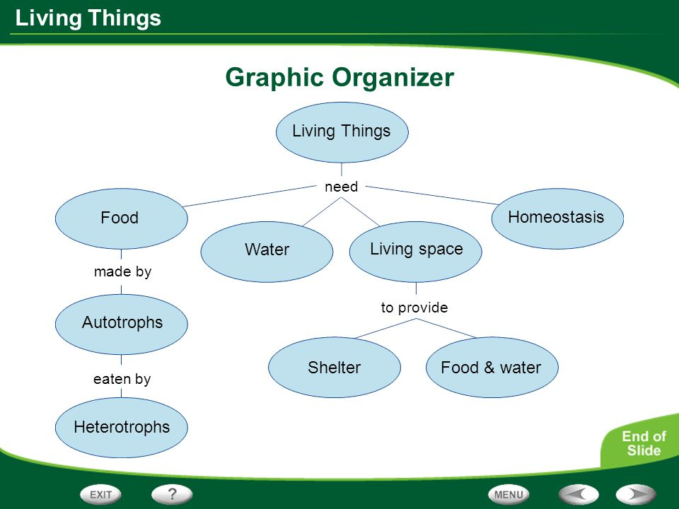 Graphic Organizer Living Things Food Homeostasis Water Living space