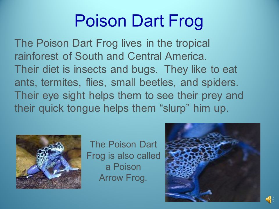 The Poison Dart Frog is also called a Poison