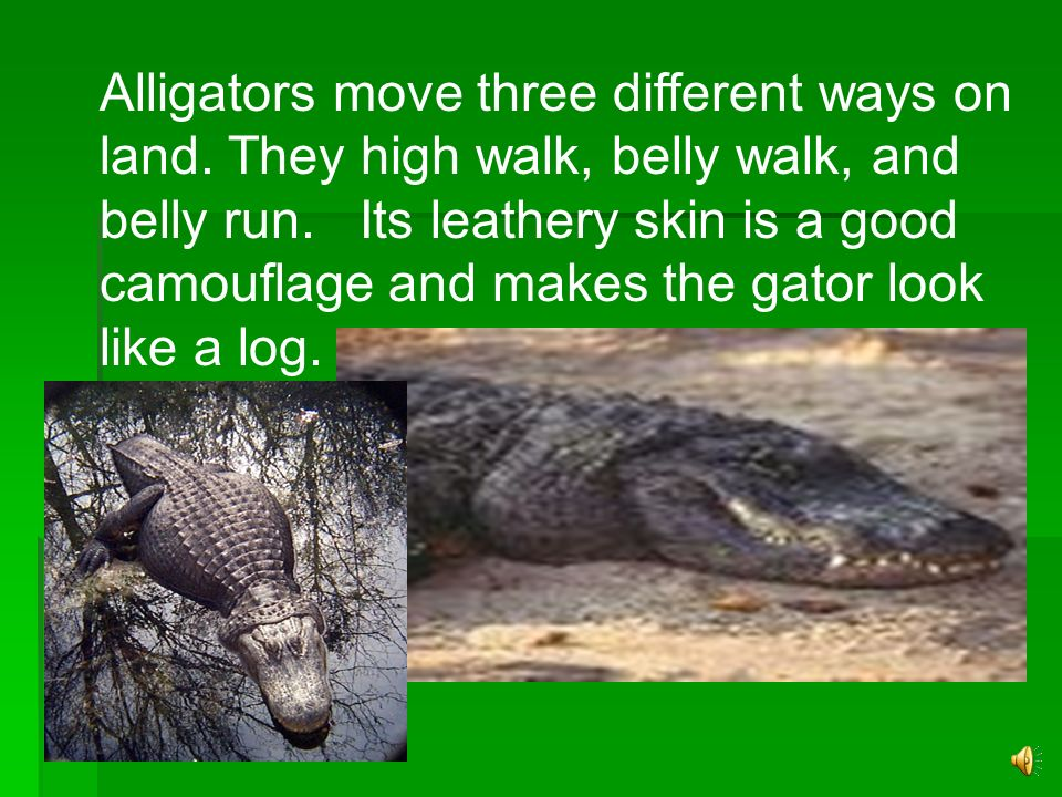Alligators move three different ways on land