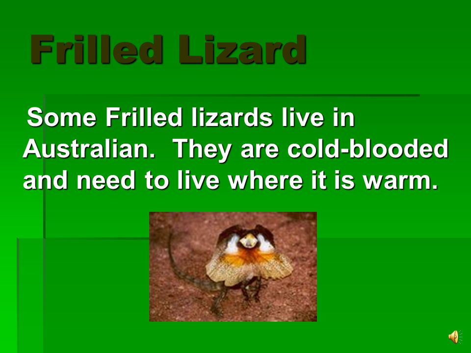 Frilled Lizard Some Frilled lizards live in Australian.