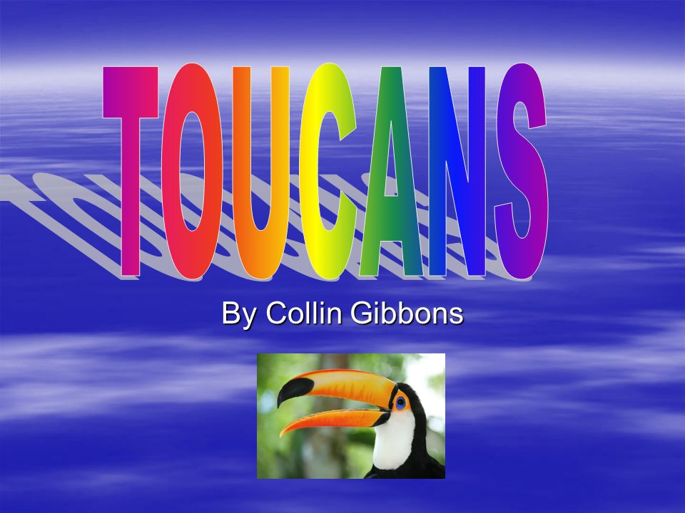 TOU can s TOUCANS By Collin Gibbons