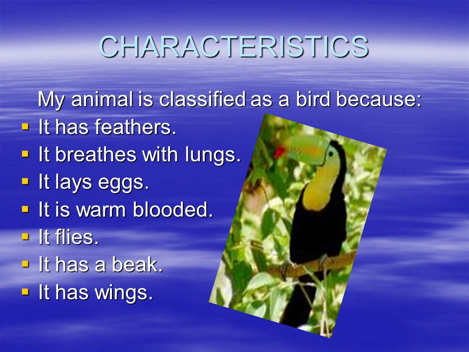 CHARACTERISTICS My animal is classified as a bird because: