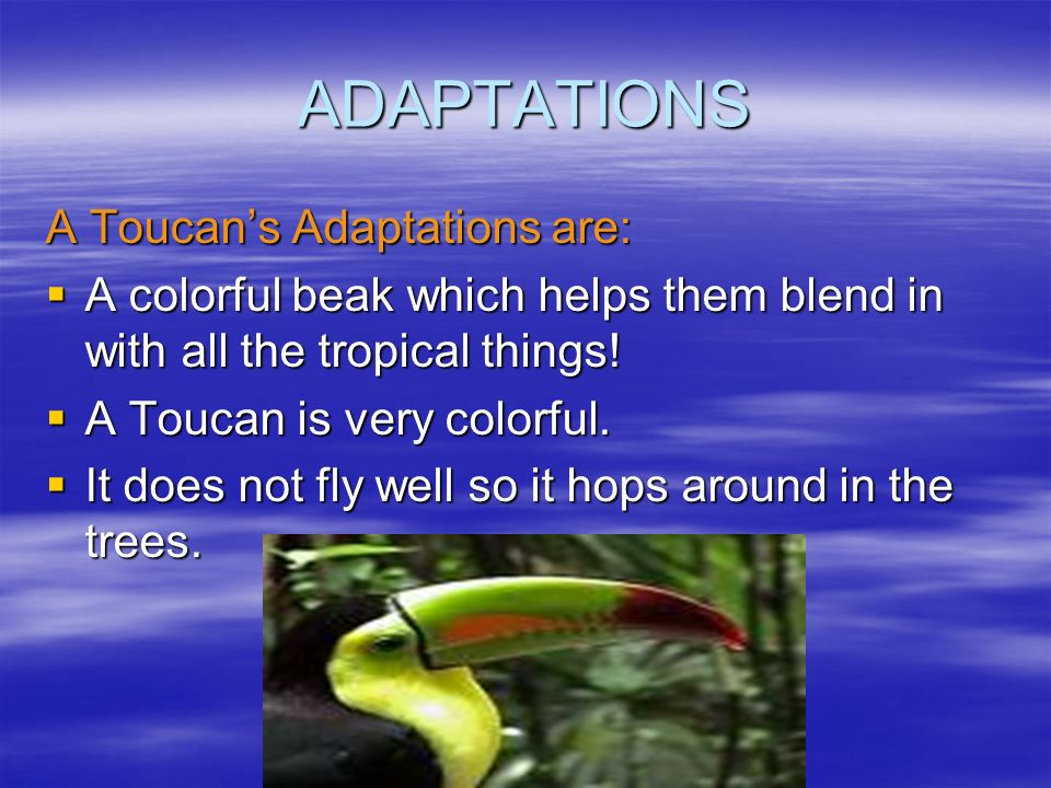 ADAPTATIONS A Toucan's Adaptations are: