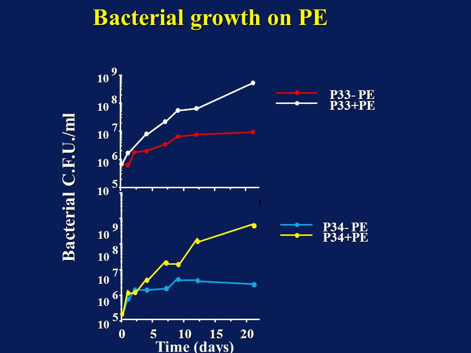 Bacterial growth on PE Bacterial C.F.U./ml Time (days) P33- PE P33+PE