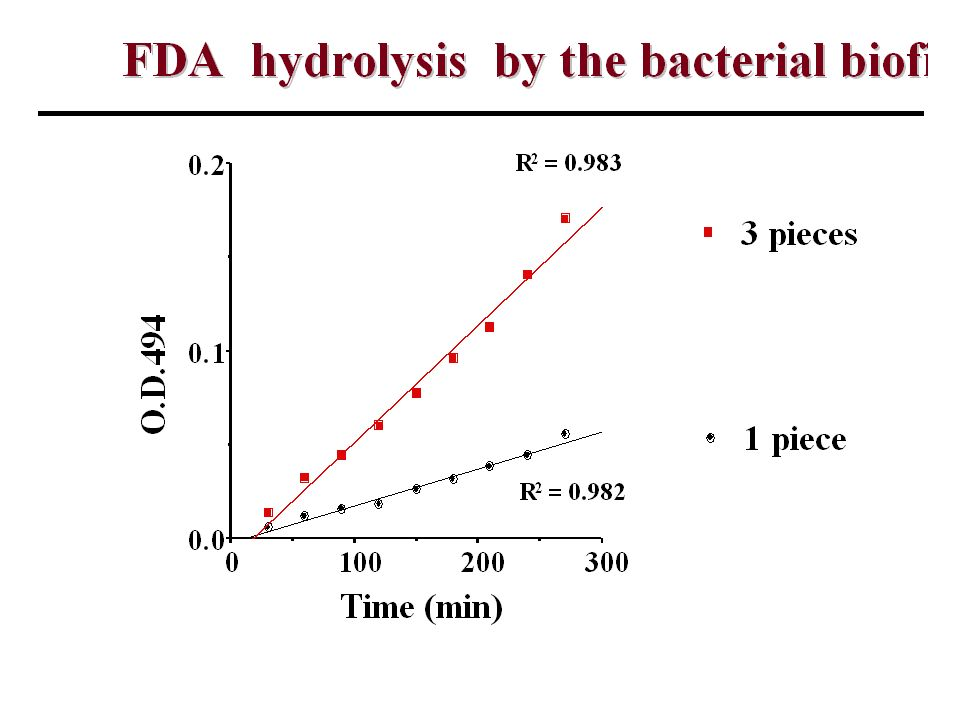 The activity of the bacterial biofilm could be measured by FDA hydrolysis by extracellular esterases produced by the bacterial biofilm