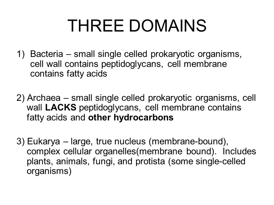 THREE DOMAINS Bacteria – small single celled prokaryotic organisms, cell wall contains peptidoglycans, cell membrane contains fatty acids.