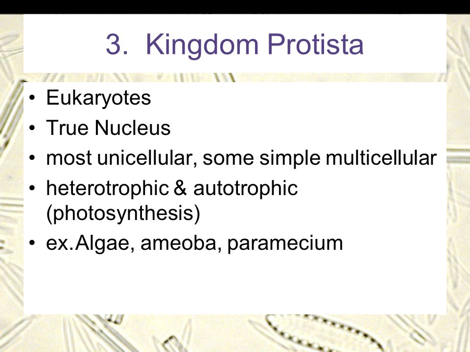 3. Kingdom Protista Eukaryotes True Nucleus