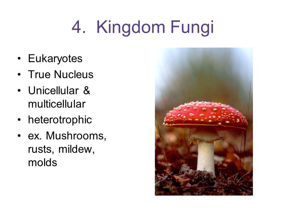 4. Kingdom Fungi Eukaryotes True Nucleus Unicellular & multicellular