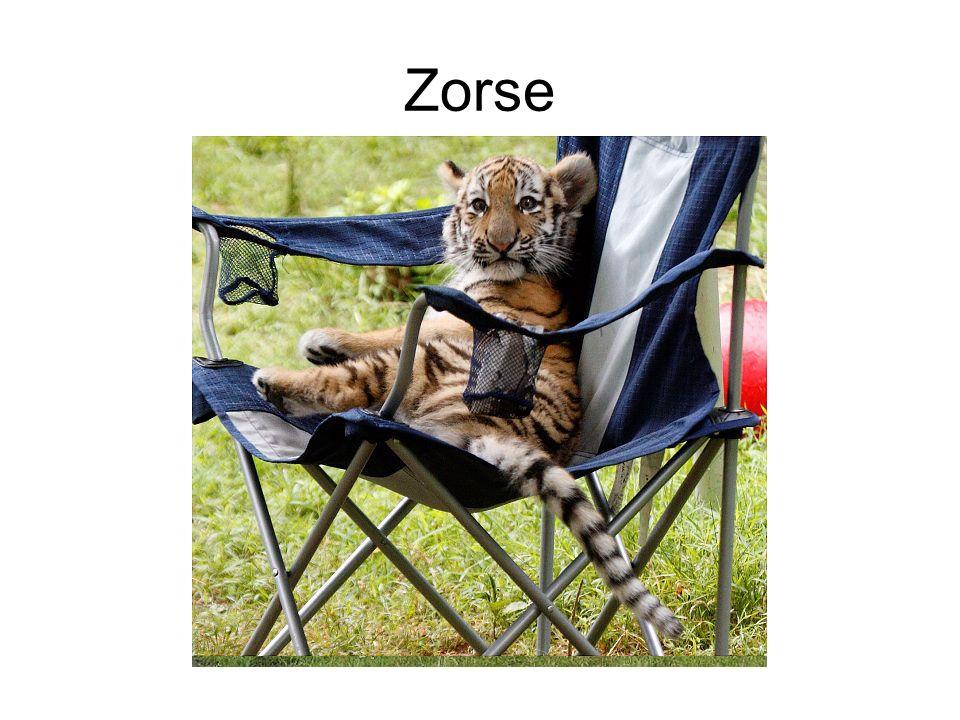 Zorse