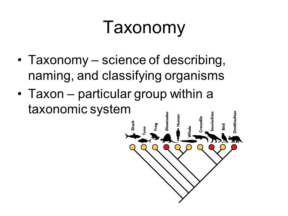 Taxonomy Taxonomy – science of describing, naming, and classifying organisms.