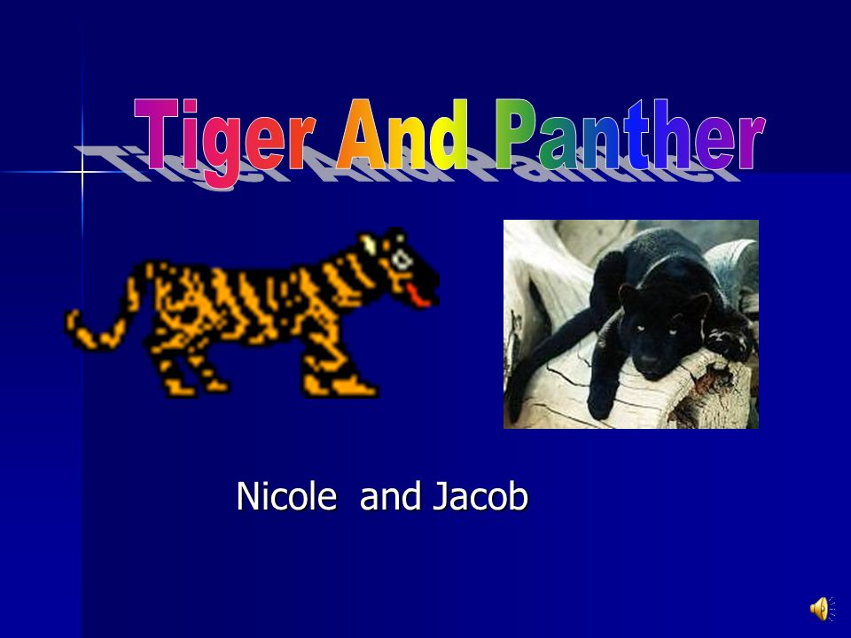 Tiger And Panther Nicole and Jacob