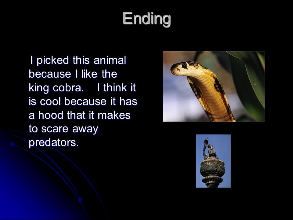 Ending I picked this animal because I like the king cobra.