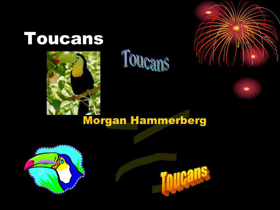 Toucans Toucans Morgan Hammerberg Toucans